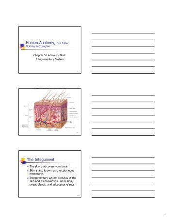 chapter 5 the integumentary system study guide answers