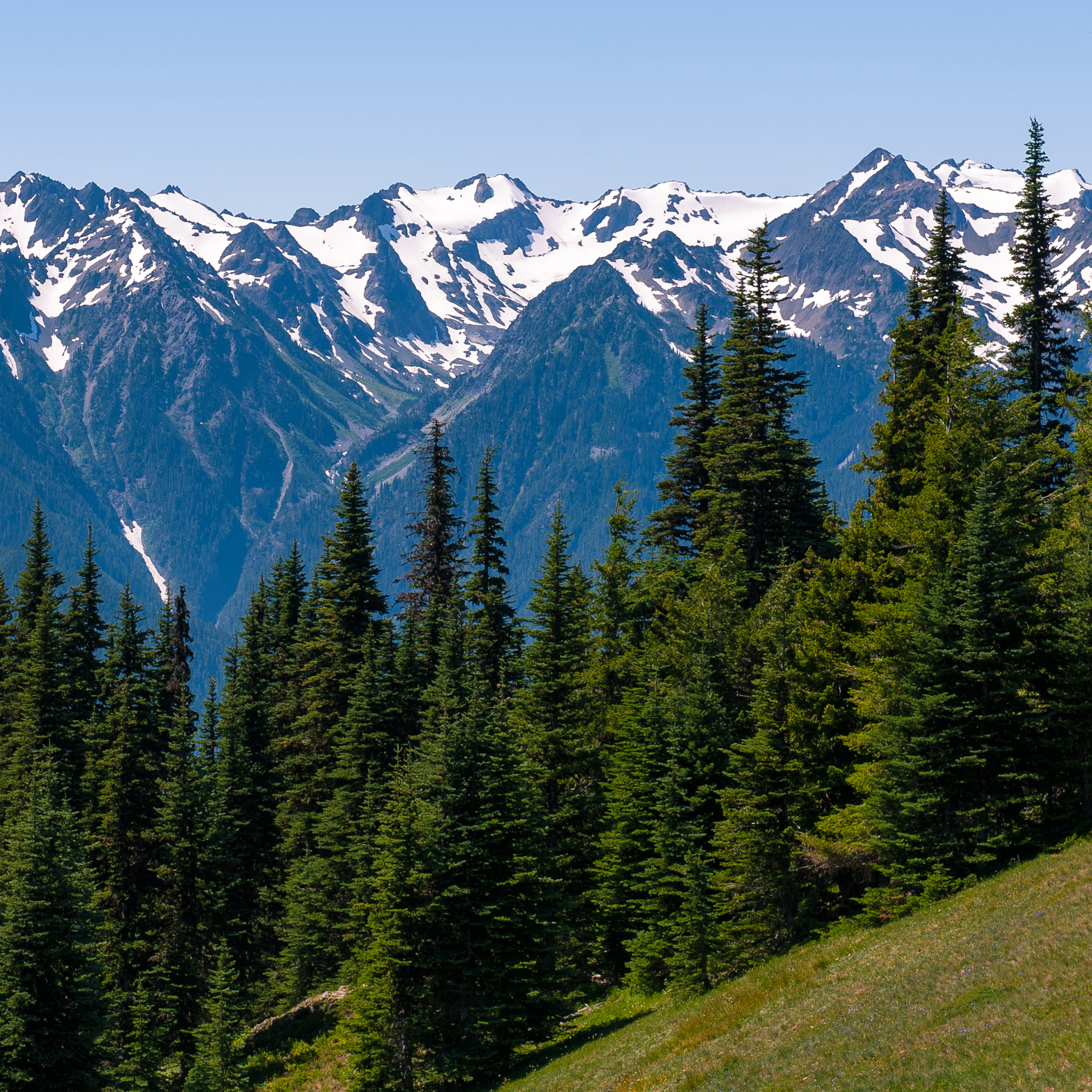 guided tours of olympic national park
