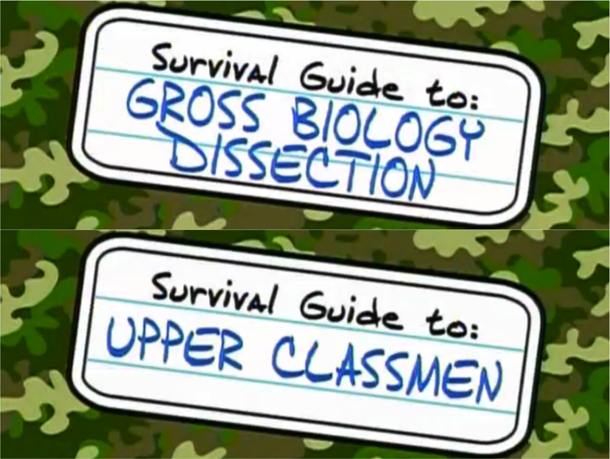 ned school survival guide episodes