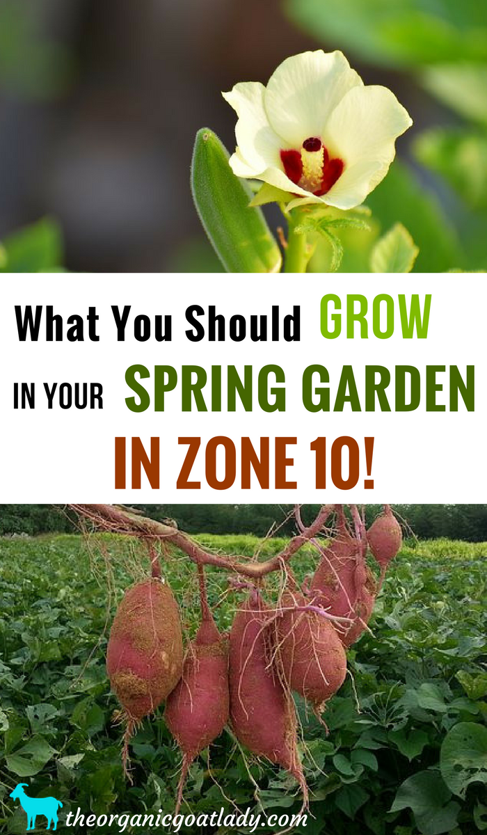zone 9 spring planting guide